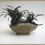 Japanisches Schwarzgras in einer Schale von Horst Heinzlreiter.