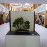 bonsaikulturtage2011-15